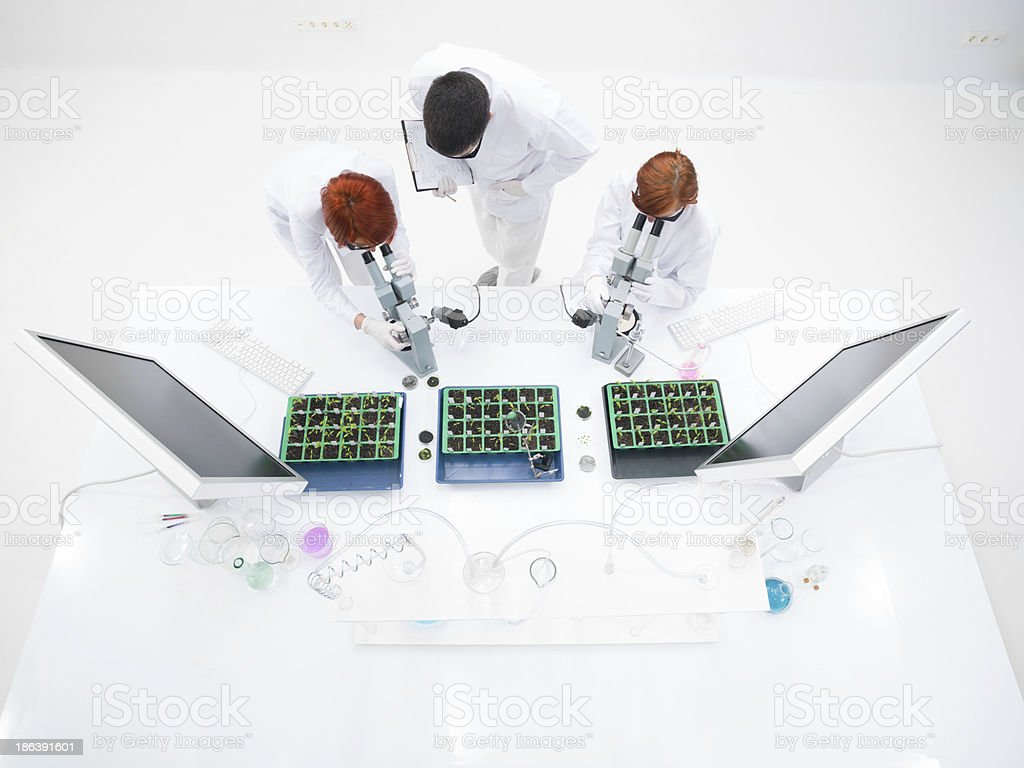 chemistry laboratory experiment royalty-free stock photo