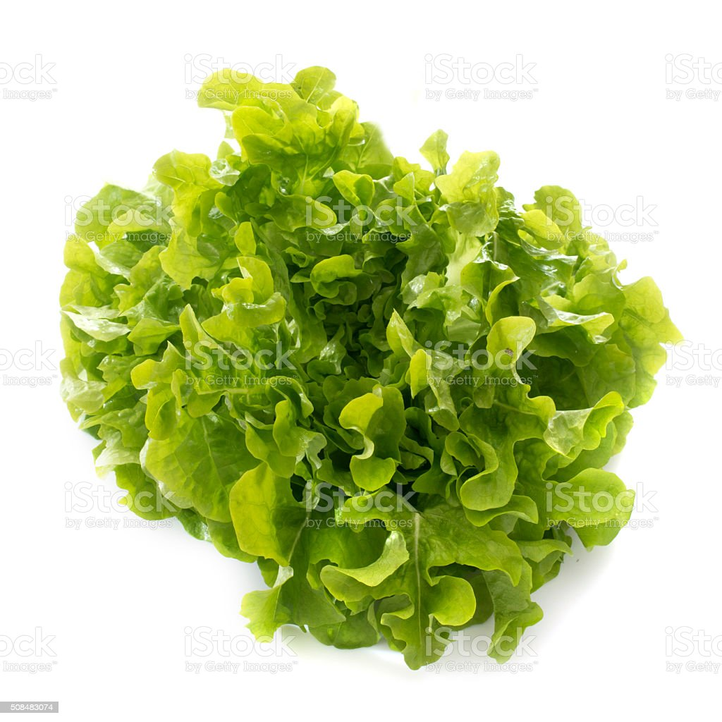 feuille de chene lettuce stock photo