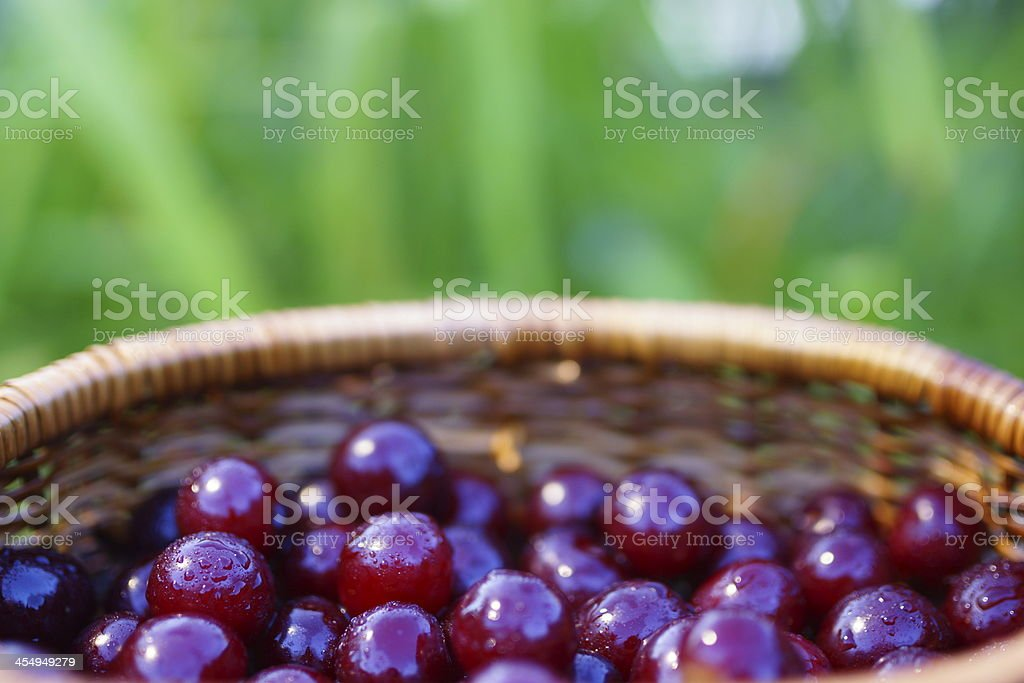 Cherries Fruit in Basket Arrangement. royalty-free stock photo