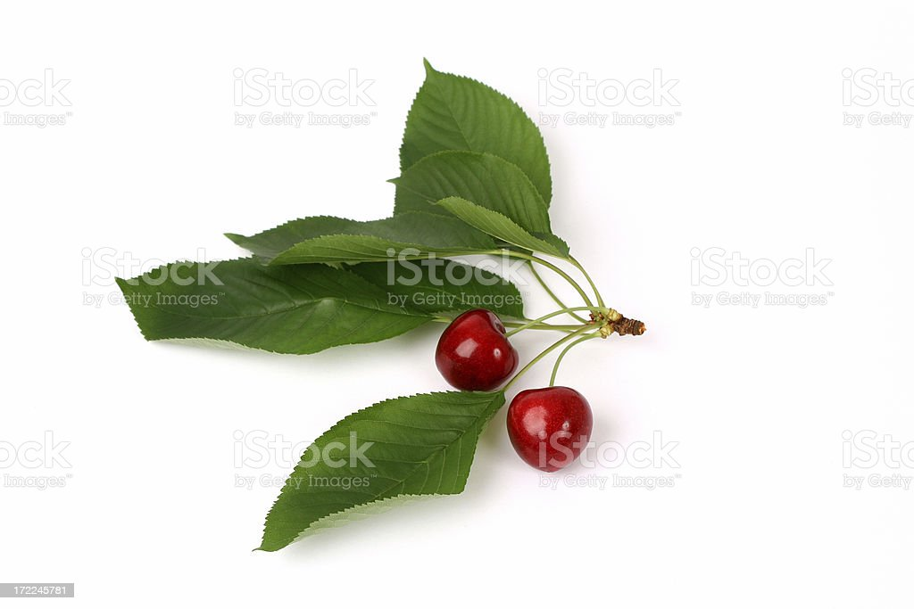 Cherries whit leafs royalty-free stock photo