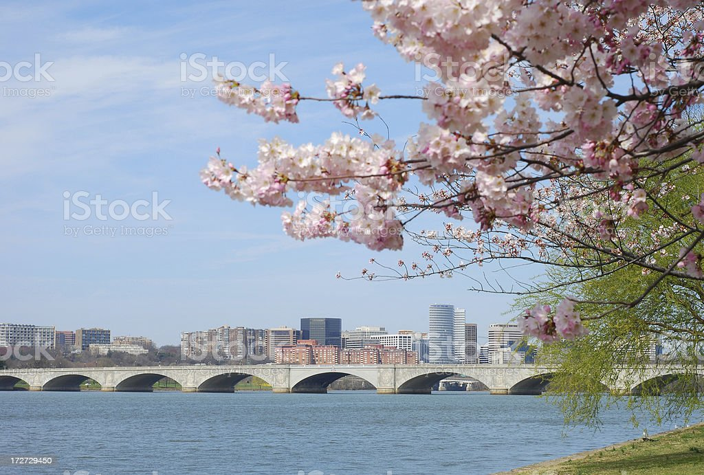 Cherry Blossom and Bridge on Potomac River, Washington DC stock photo