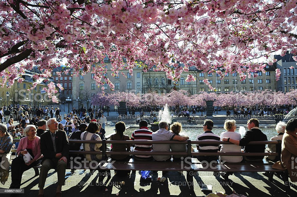 Cherry blossom and fountain royalty-free stock photo
