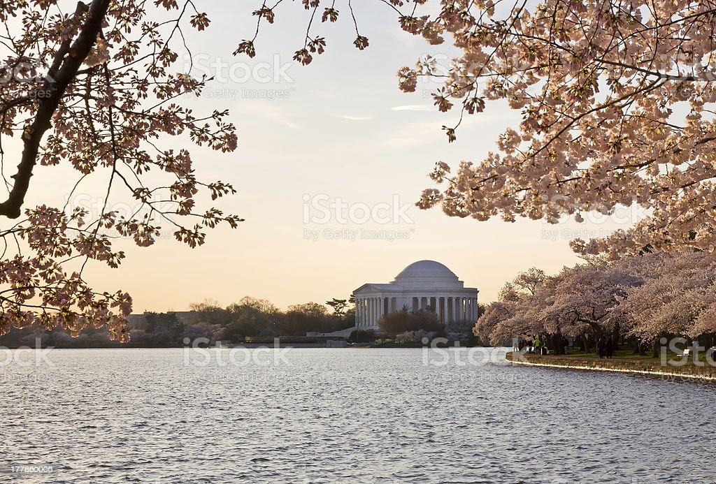 Cherry Blossom and Jefferson Memorial stock photo