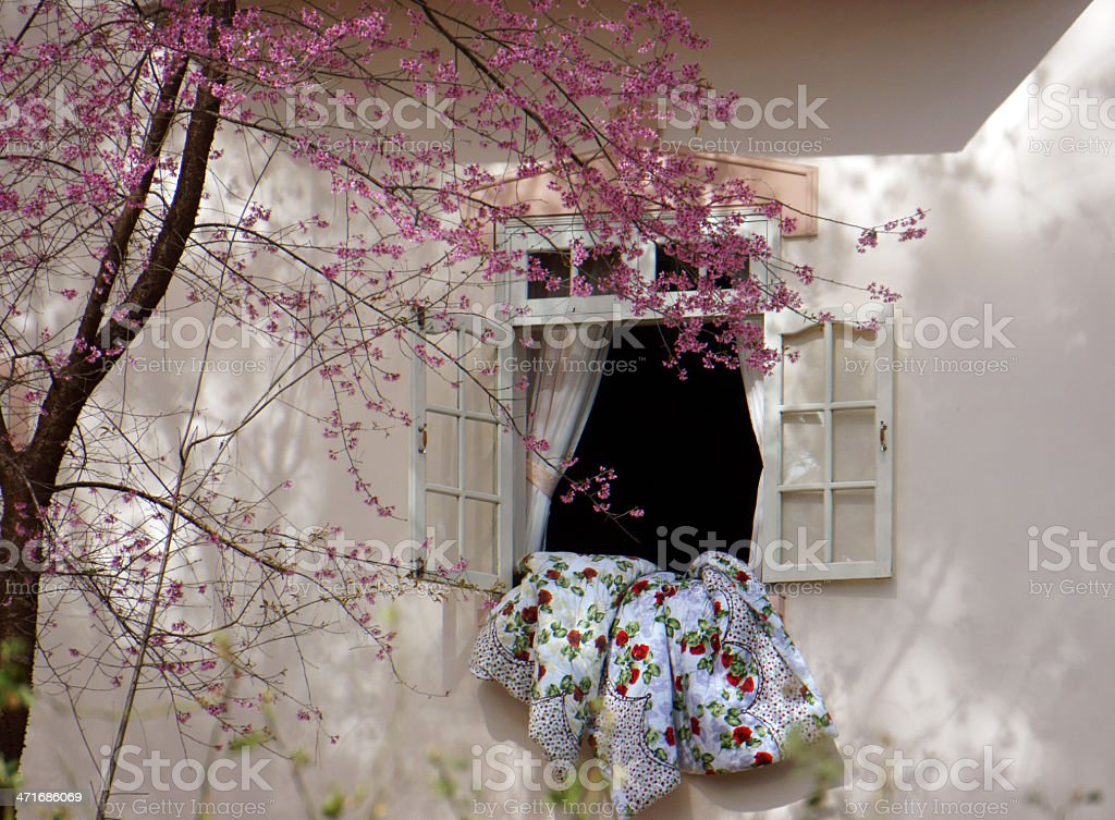 Cherry blossom are in flower beside window royalty-free stock photo