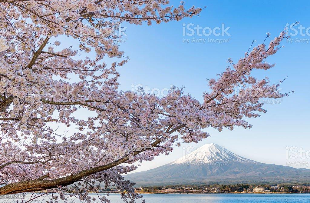 Cherry Blossom at Kawaguchiko Lake with Fuji Mountain Background stock photo
