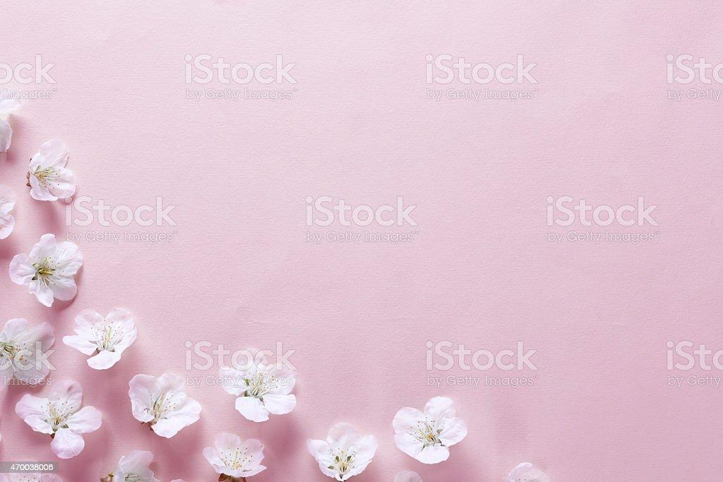 Cherry Blossom Border stock photo