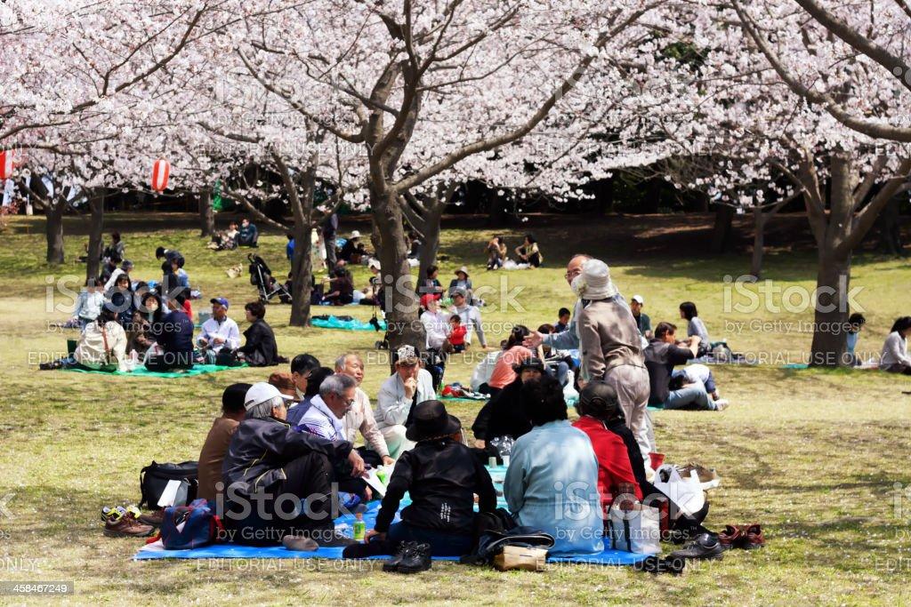 Cherry blossom celebration stock photo