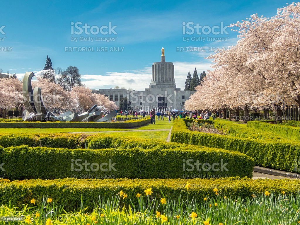 Cherry Blossom Day Oregon State Capitol Looking Across Capitol Mall stock photo