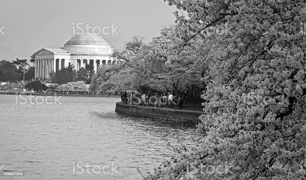 Cherry Blossom Festival stock photo