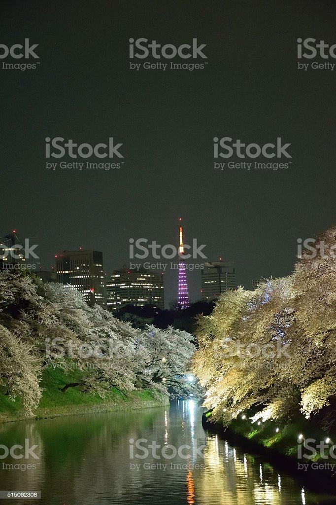 Cherry Blossom Illumination in Tokyo stock photo