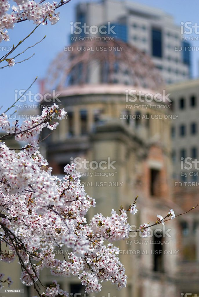 Cherry blossom in front of the A-Bomb Dome, Hiroshima, Japan royalty-free stock photo