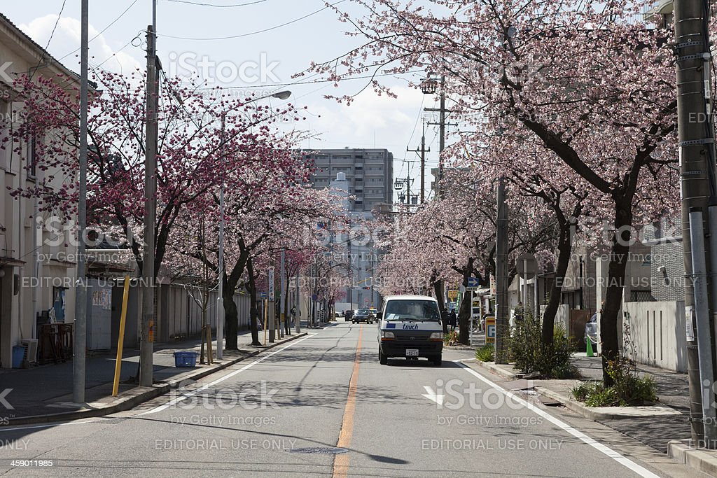 Cherry Blossom in Japan royalty-free stock photo