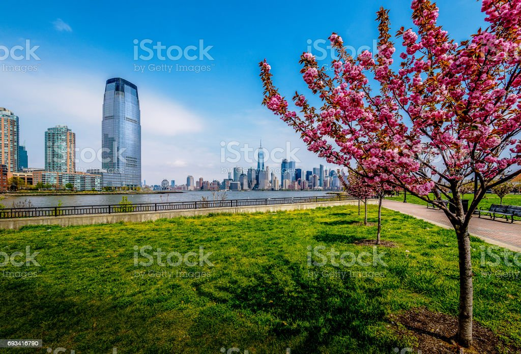 Cherry Blossom Jersey stock photo