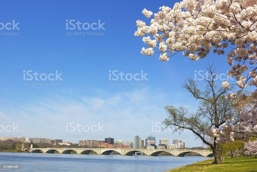 Cherry blossom near Potomac River in Washington DC stock photo