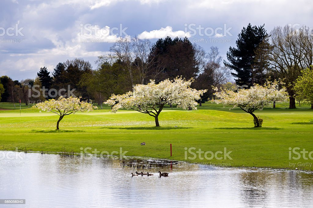 Cherry blossom on golf course in springtime in London England stock photo