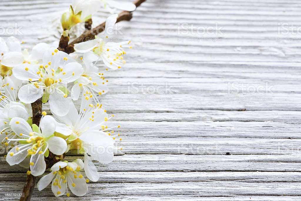 Cherry blossom on wooden background royalty-free stock photo