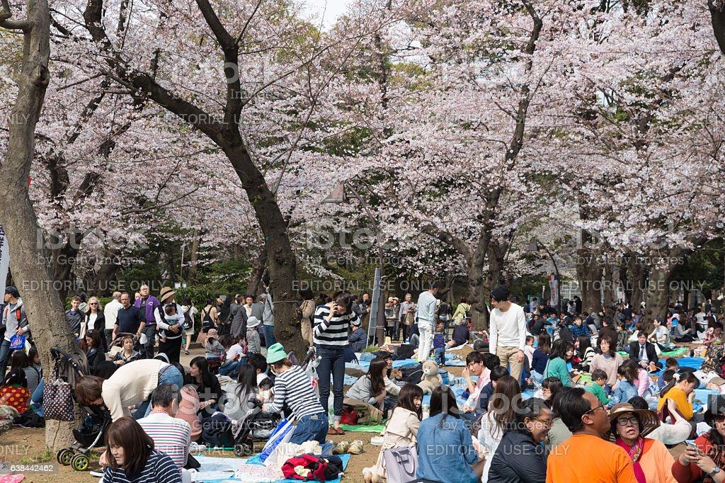 Cherry Blossom season at Ueno Park, Tokyo, Japan stock photo