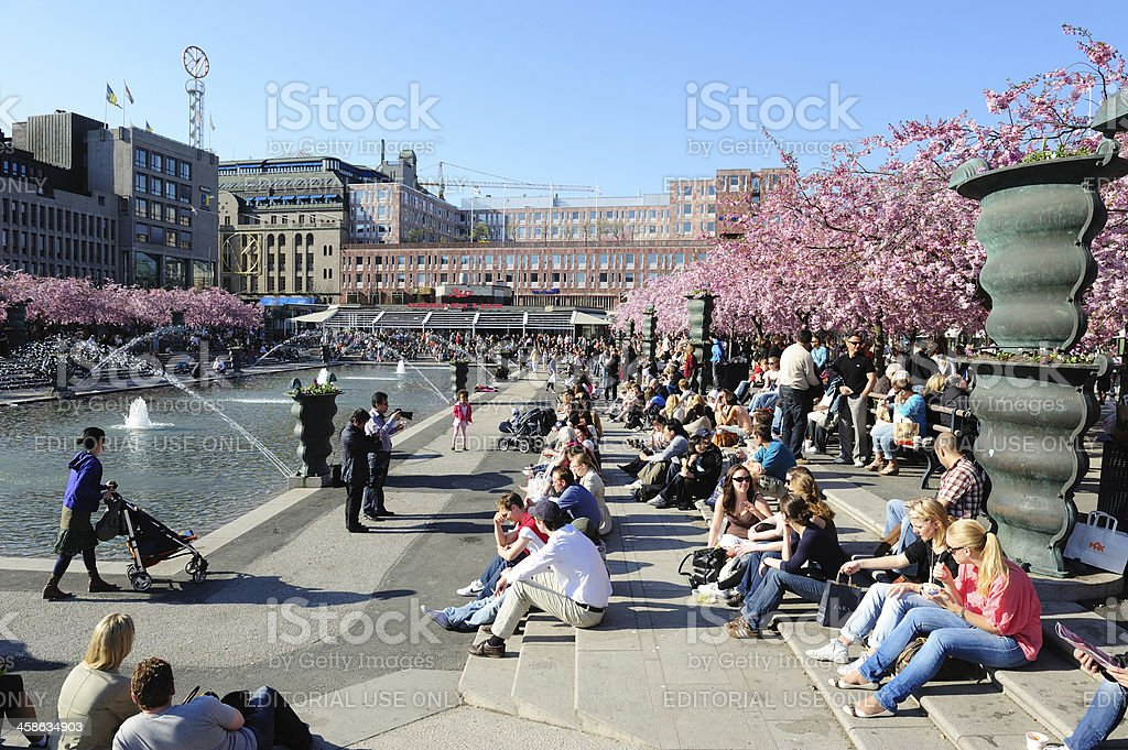 Cherry blossom, tourists in the sun royalty-free stock photo