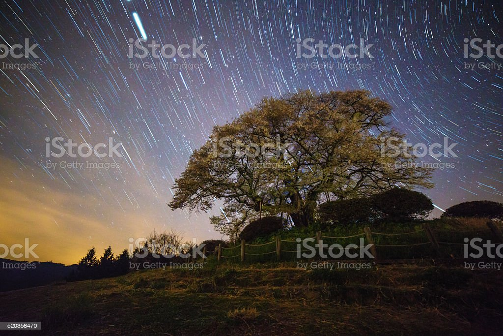 Cherry blossom tree at night underneath the north star stock photo