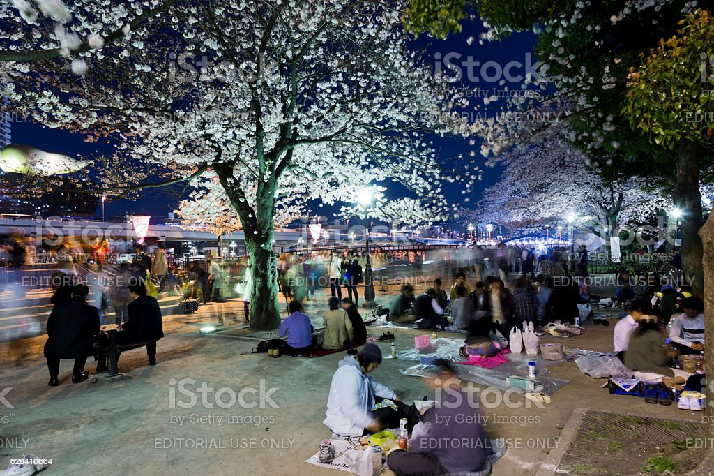 Cherry Blossom Viewing Parties at Night stock photo