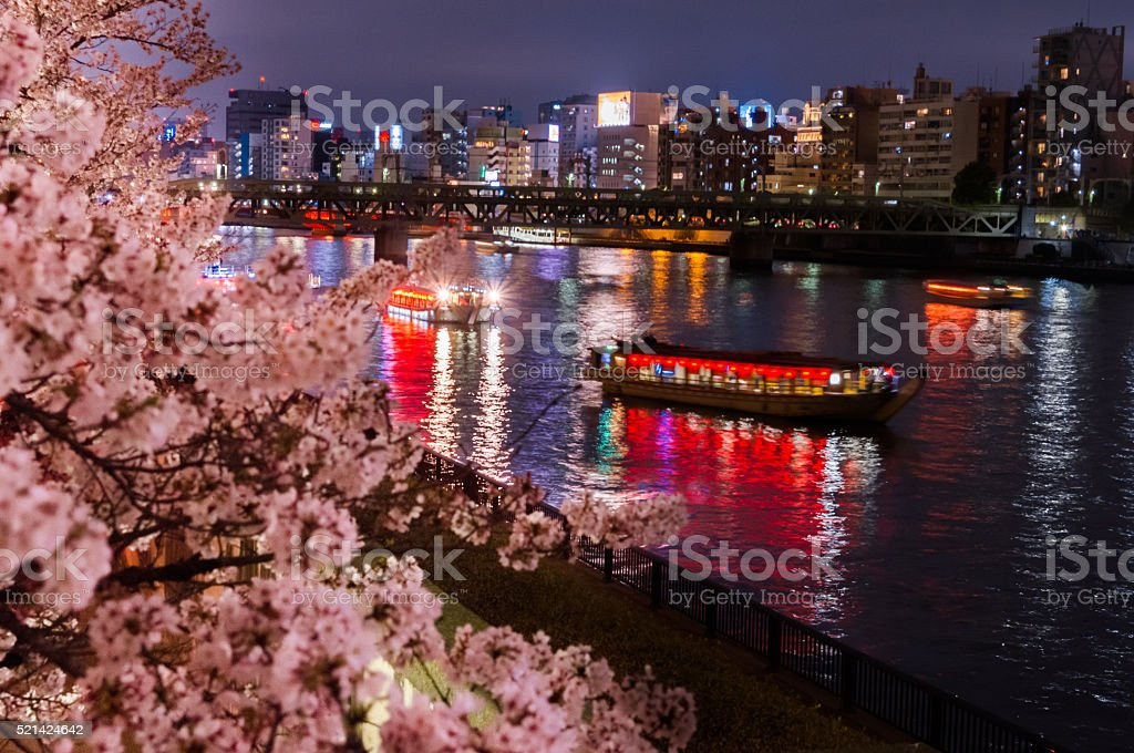 cherry blossom,night cruise stock photo