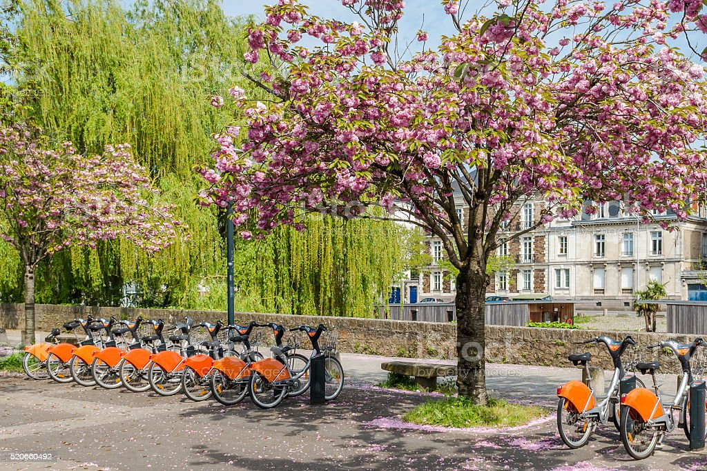 cherry blossoms and bikes in the park.Nantes.France,11/04/ 2014 stock photo