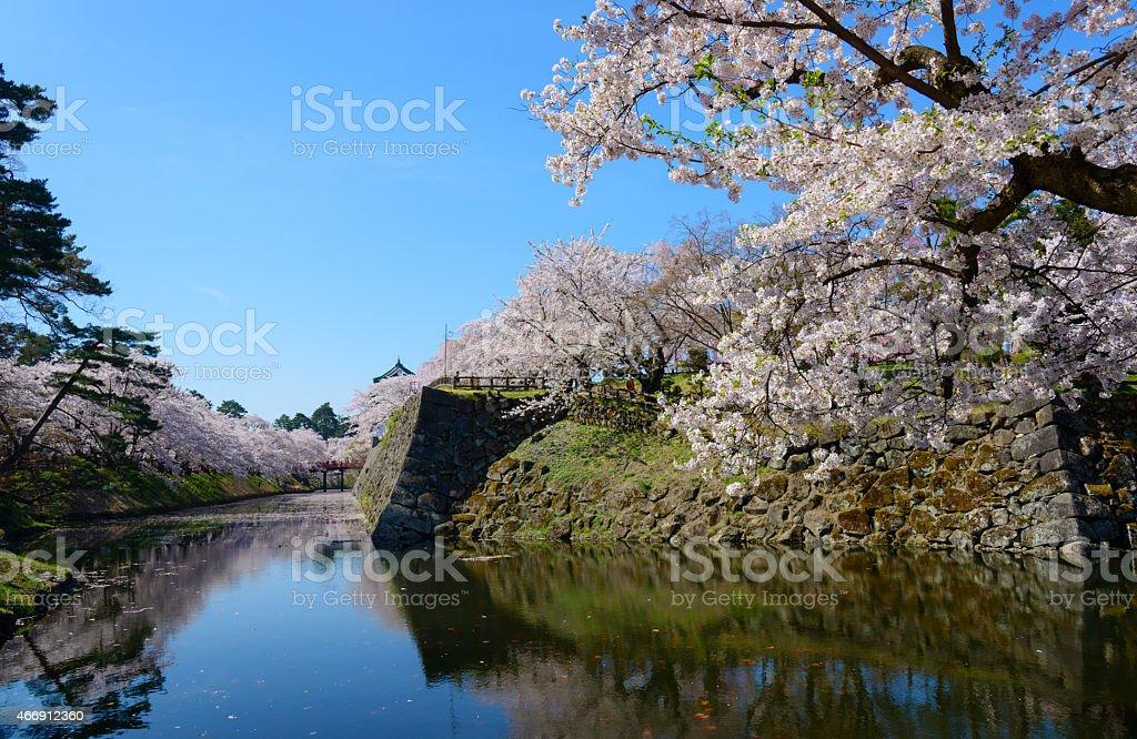 Cherry blossoms and Hirosaki Castle stock photo