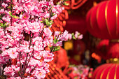 Cherry blossoms and lanterns