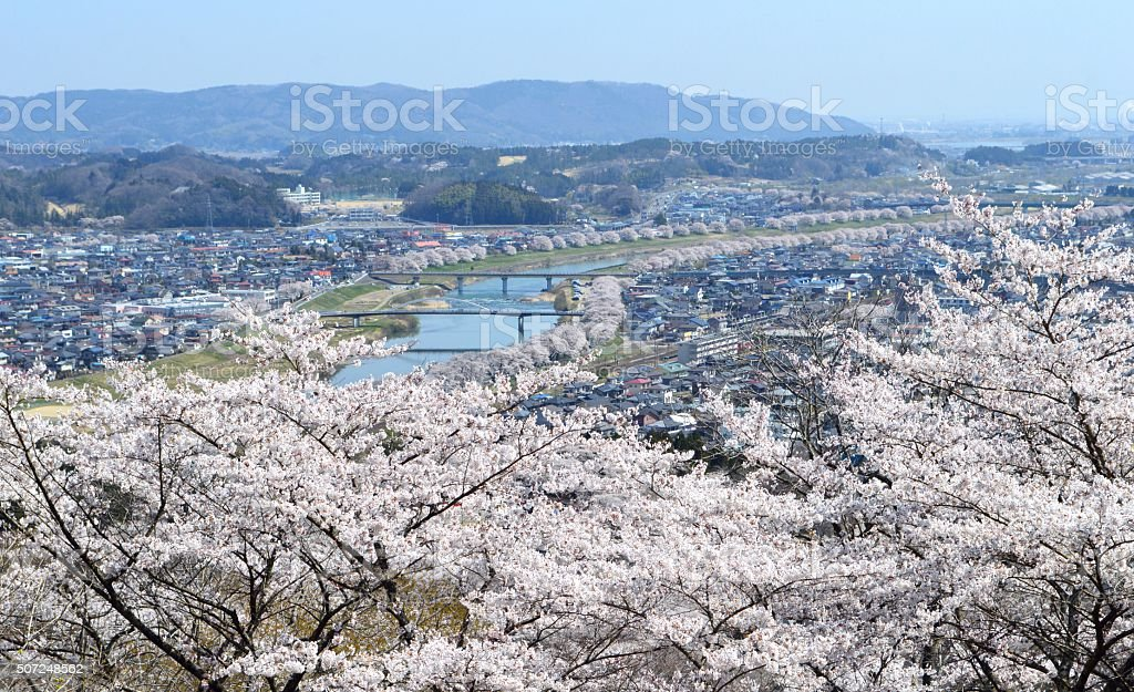Cherry blossoms and Shiroishi River stock photo