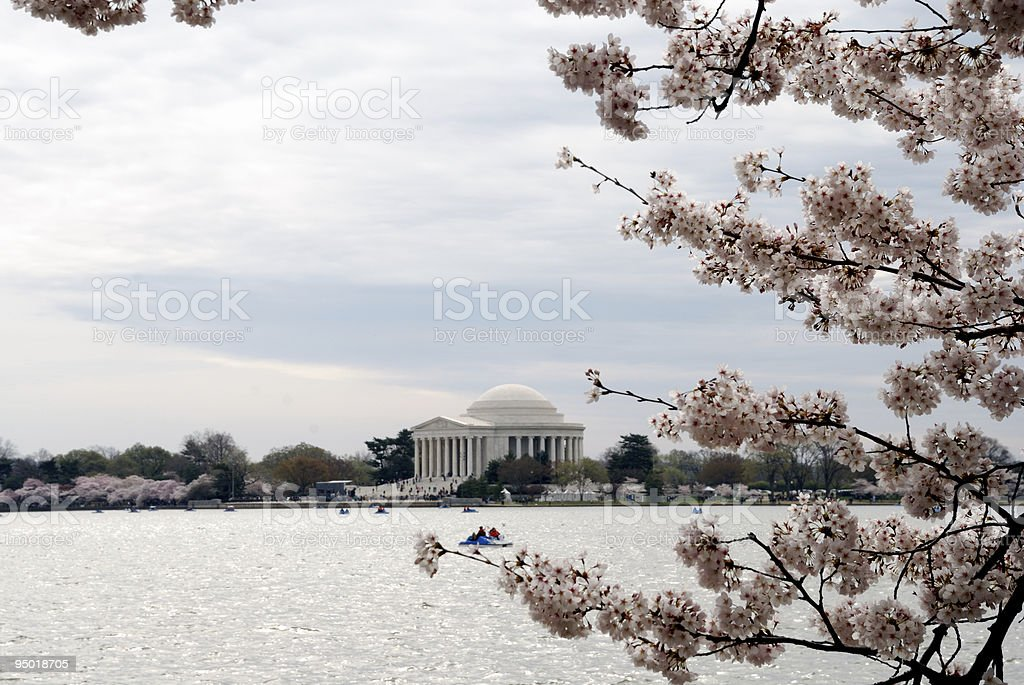 Cherry blossoms at Jefferson Memorial royalty-free stock photo