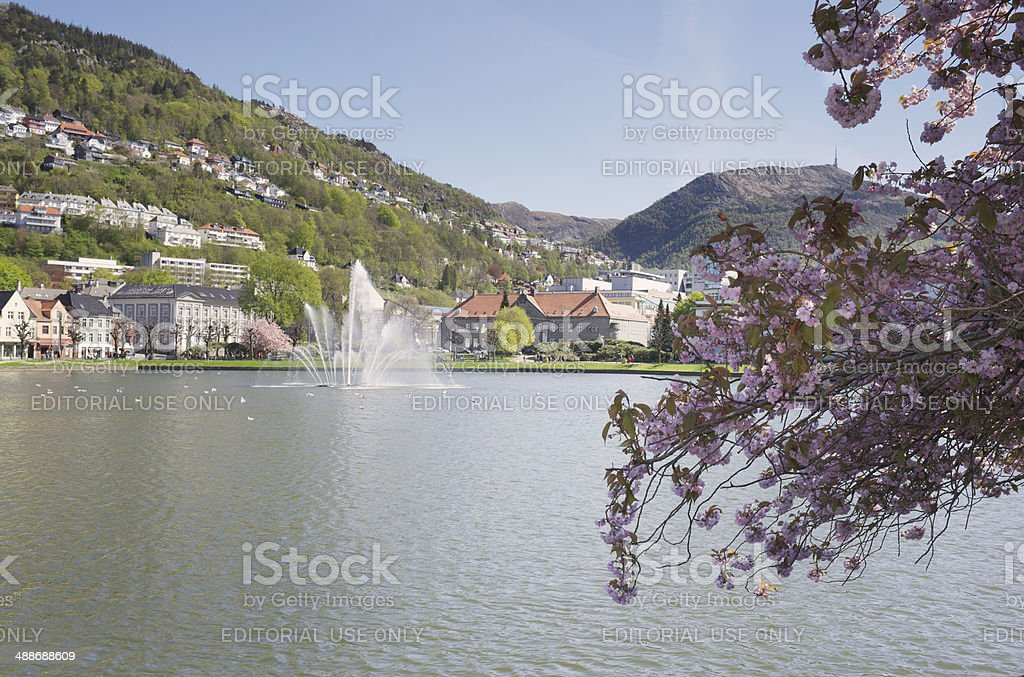 Cherry Blossoms at Lake Lille Lungegardsvannet in Bergen in Norway stock photo