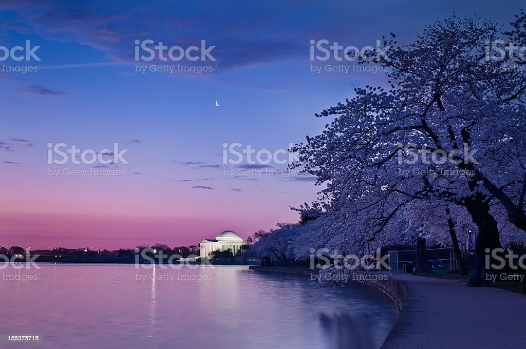 Cherry Blossoms at Twilight stock photo