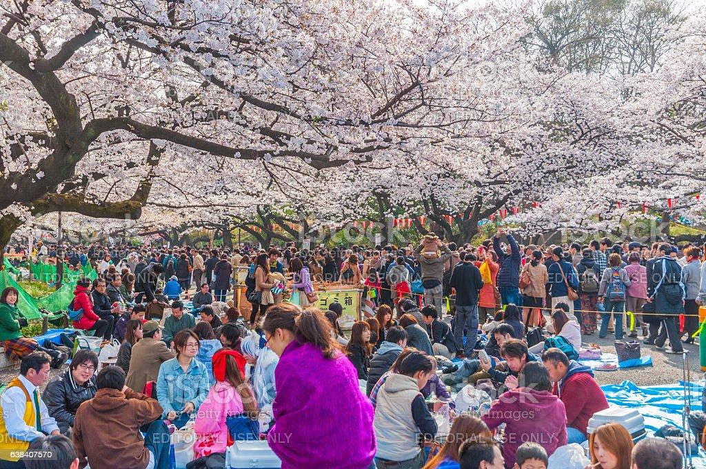Cherry Blossoms festival in Ueno Park,Tokyo,Japan stock photo