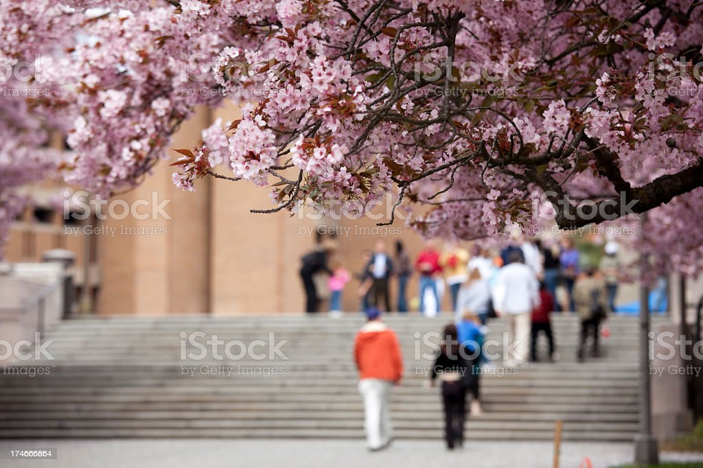Cherry blossoms near people at the University of Washington stock photo