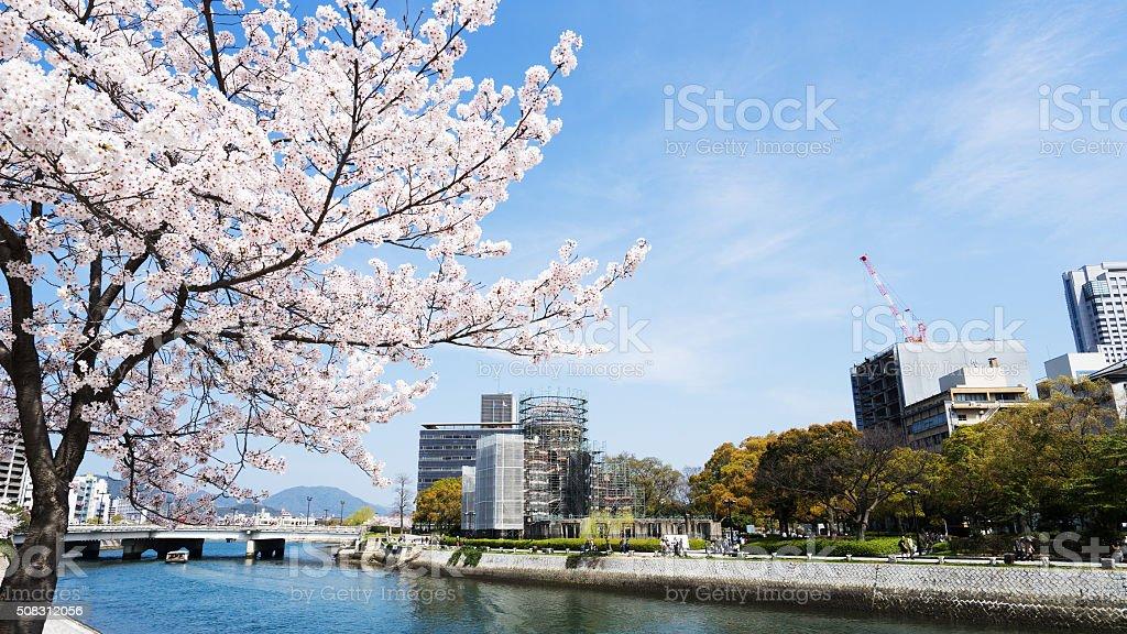 Cherry blossoms or Sakura and river at Hiroshima stock photo