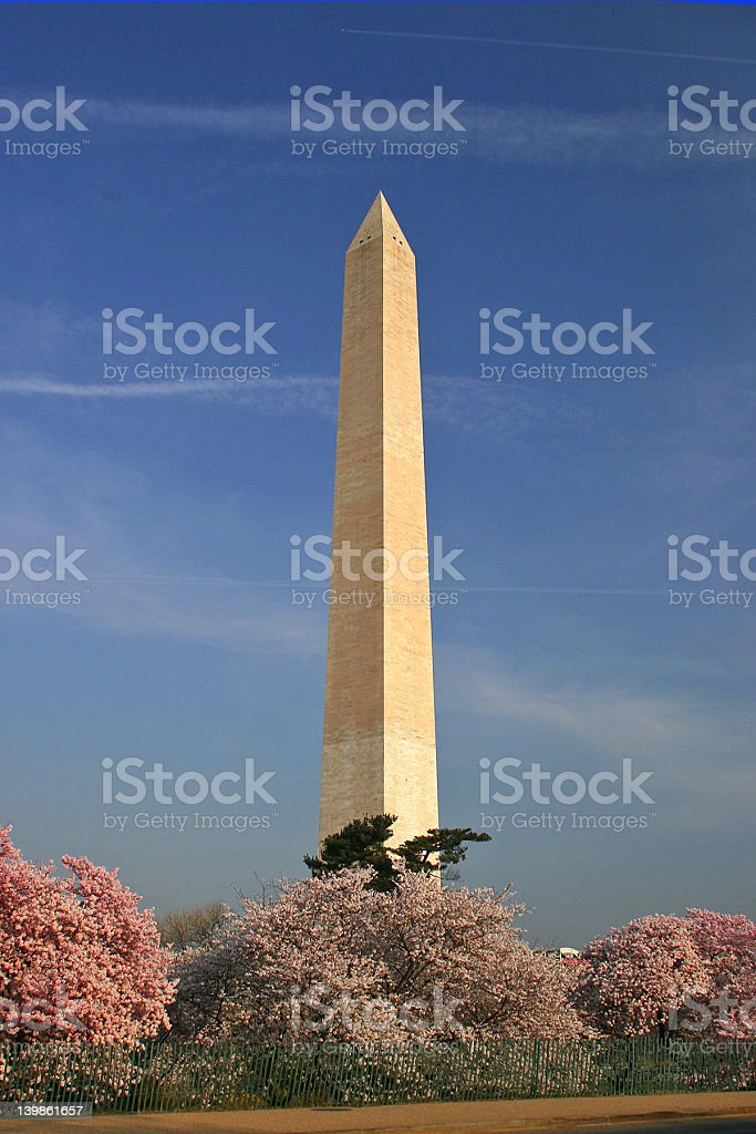 D.C. Cherry Blossoms royalty-free stock photo