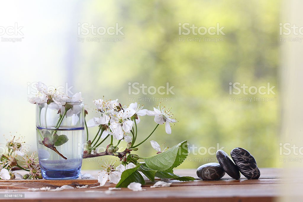 cherry flowers and branches green background foliage rain stock photo
