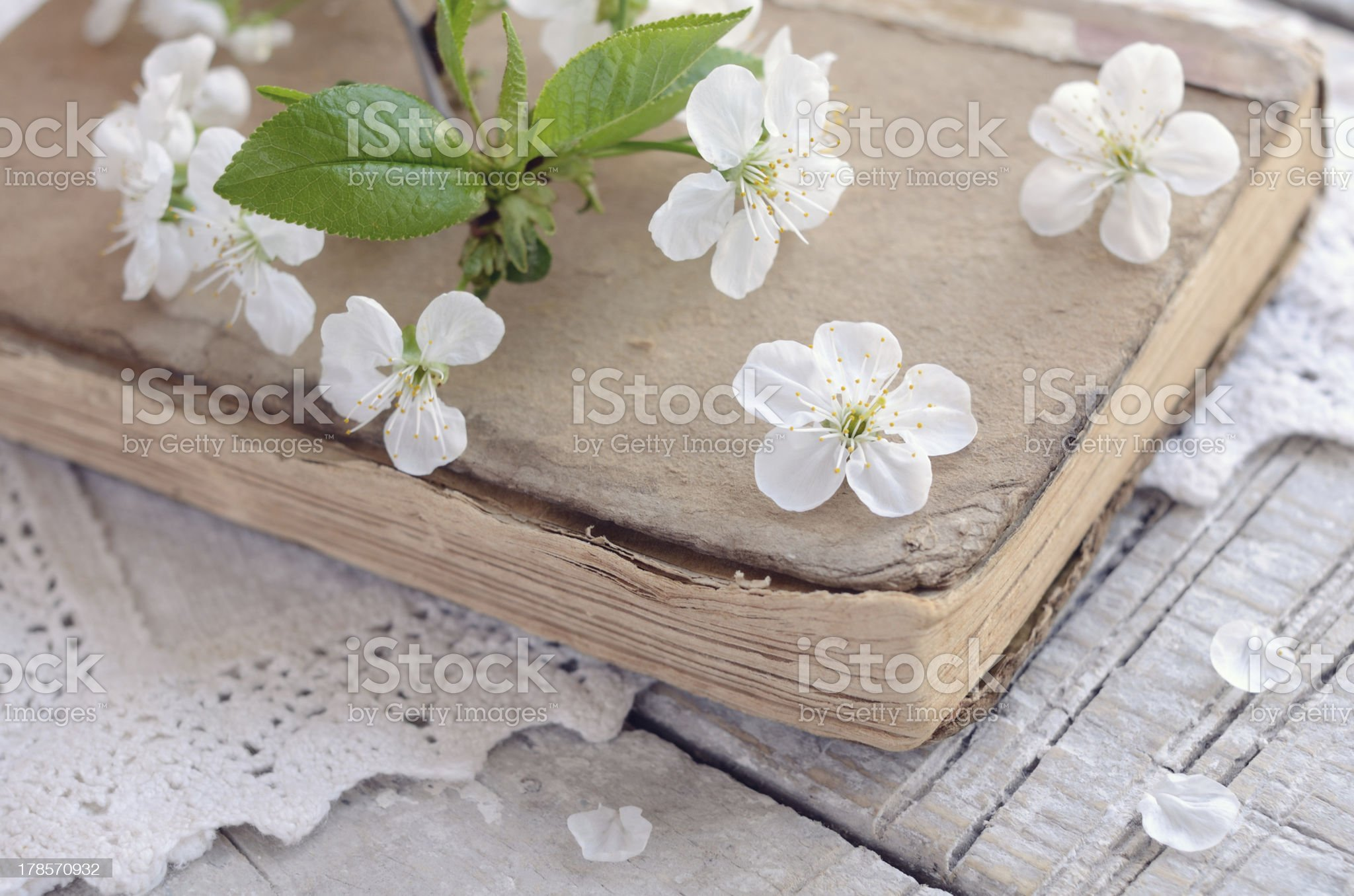 Cherry flowers laying upon old book on lace doily royalty-free stock photo