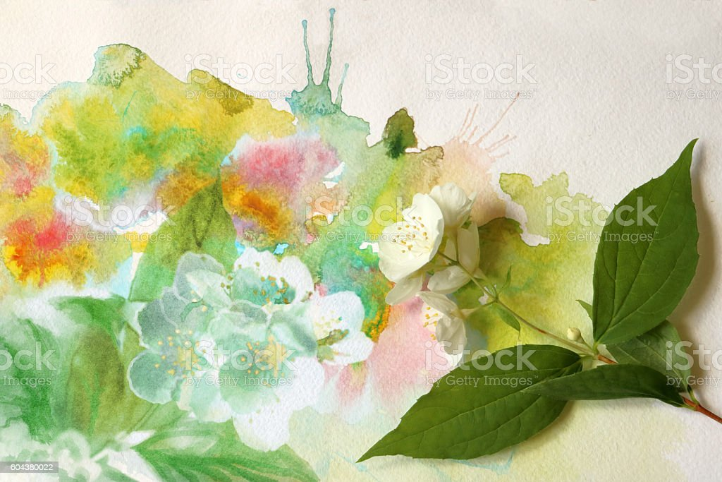 Cherry flowers on watercolor painting stock photo