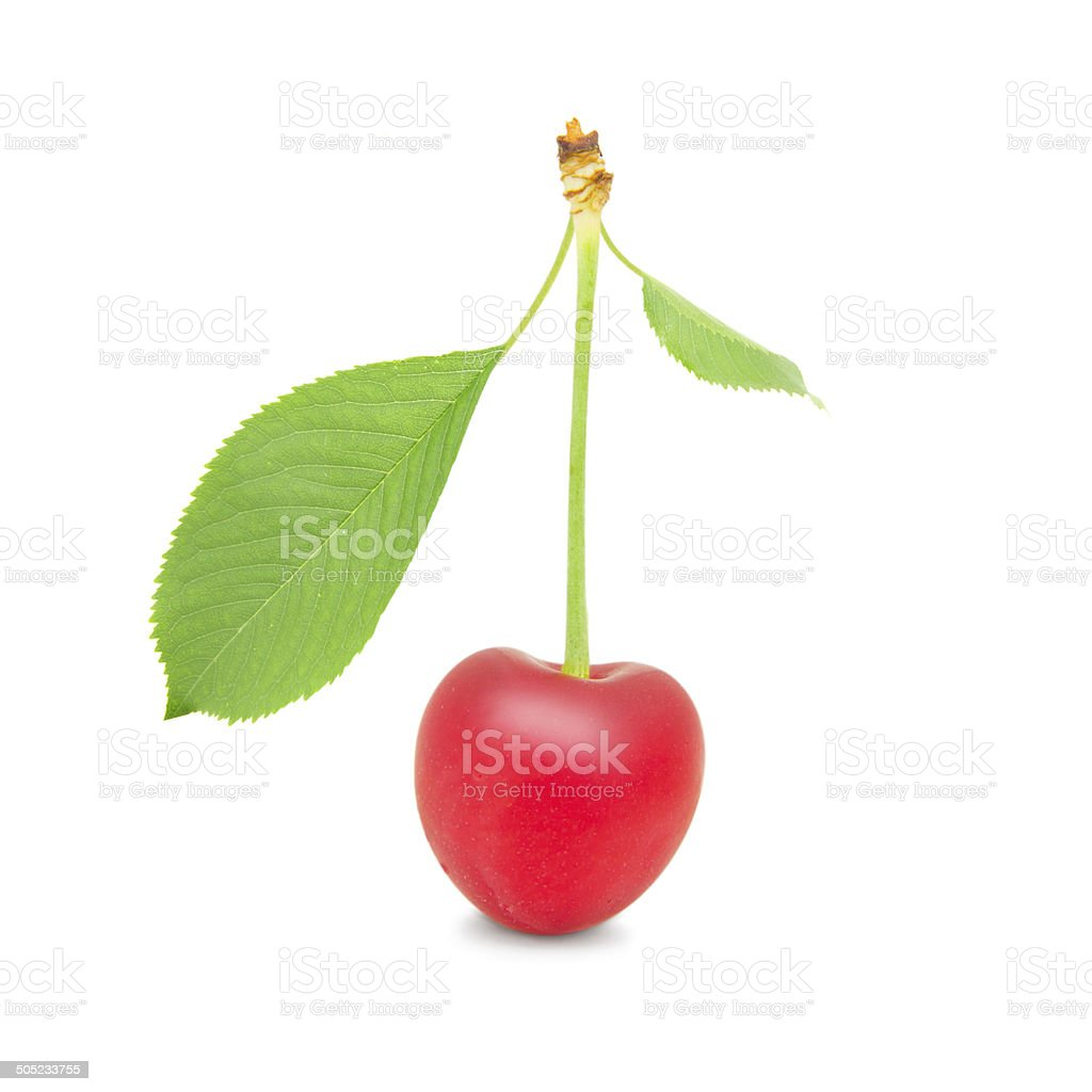 Cherry isolated royalty-free stock photo