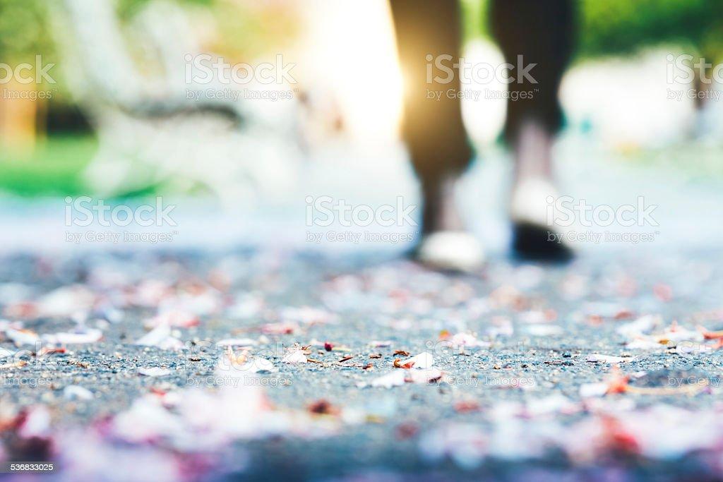 Cherry Petals In Park stock photo