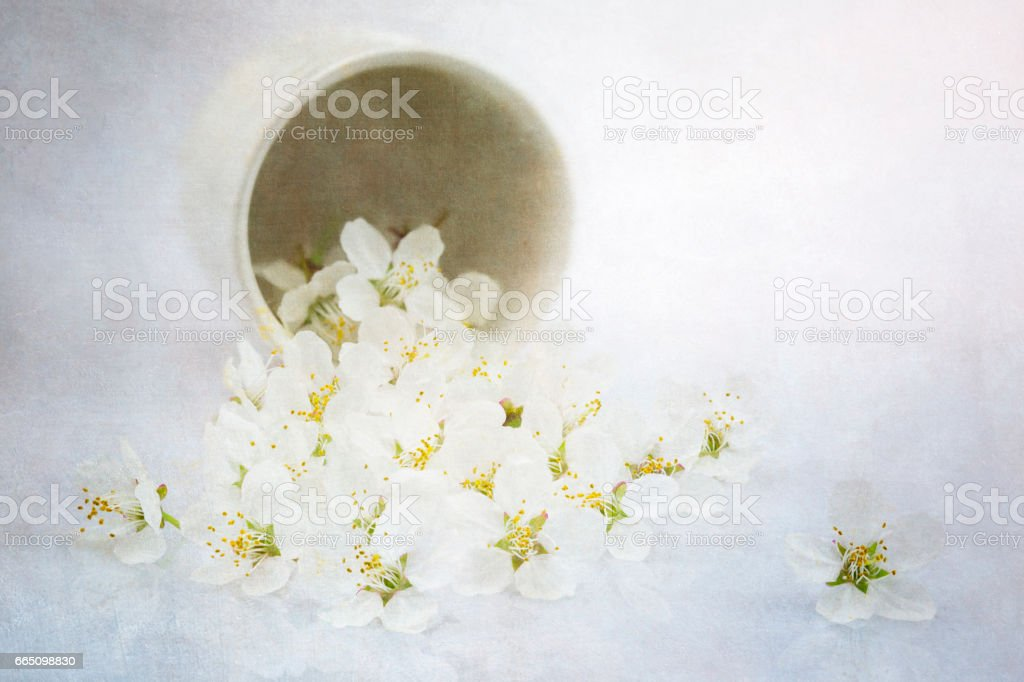 Cherry Plum blossoms with texture overlay stock photo