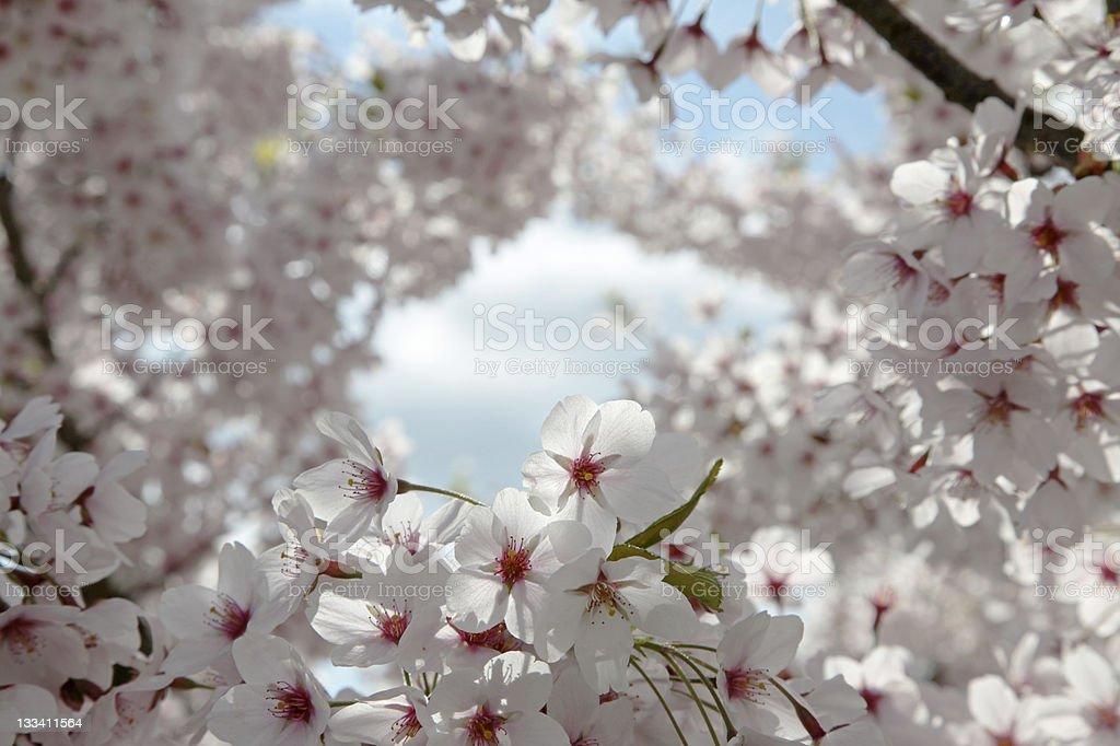 Cherry sky royalty-free stock photo