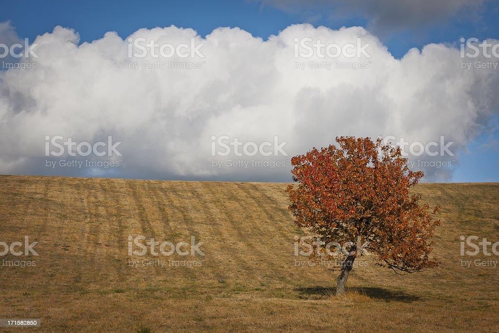 Cherry Tree and Cloud in Banjsice Slovenia royalty-free stock photo