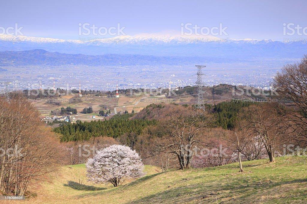 Cherry tree and mountain stock photo