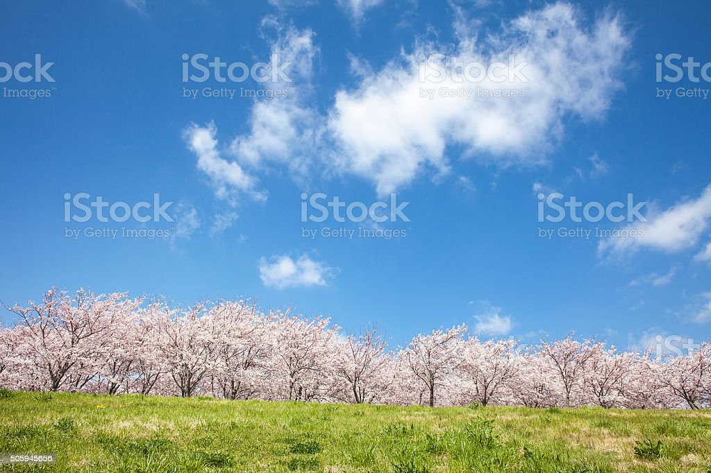 Cherry tree and Prairie stock photo