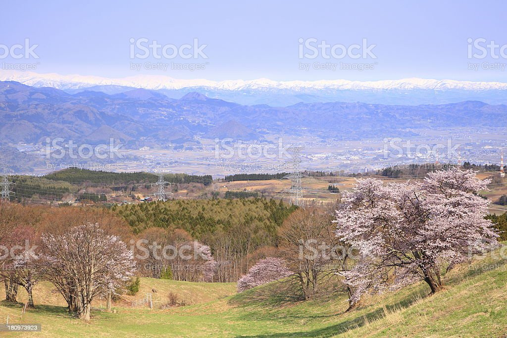 Cherry tree and snowy mountain royalty-free stock photo