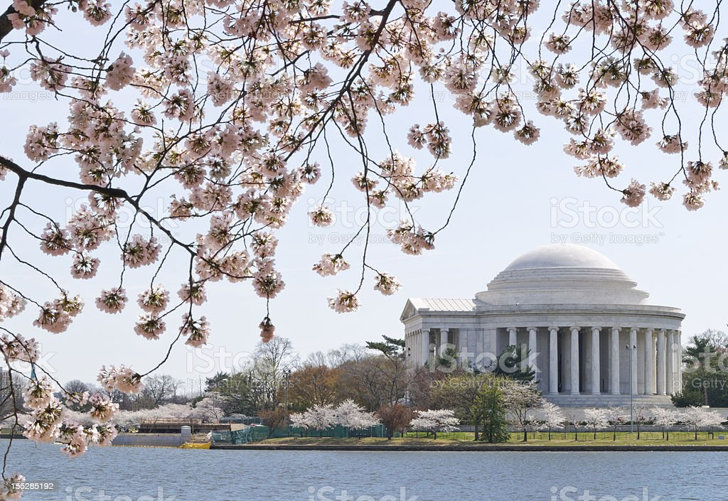 Cherry tree blossoms frame the Jefferson Memorial in Washington DC stock photo