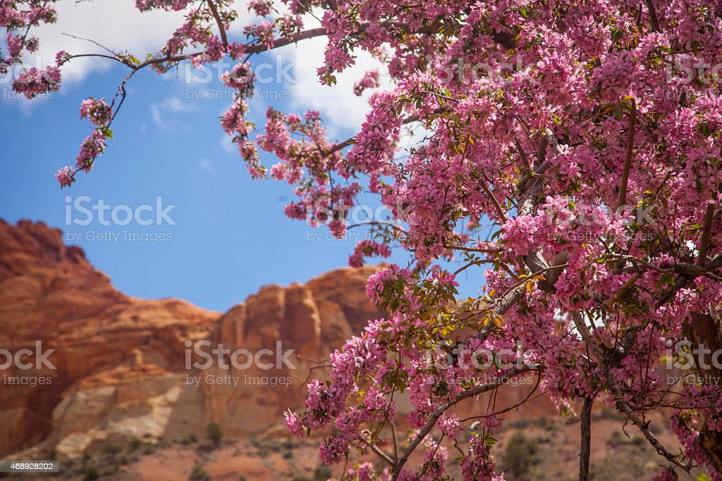 Cherry tree in Capitol Reef National Park stock photo