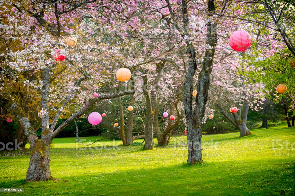Cherry tree park after Hanami holiday stock photo